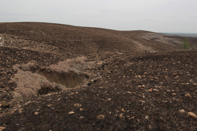 Scarred landscape of a prairie burned during nesting season